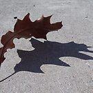 Shadow of a Leaf by rosaliemcm