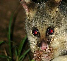 Brush Tail Possum by Cassie Robinson