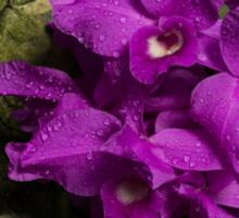 Freshly Watered Violet Orchids Sticker