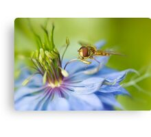 Love-in-the-mist lunch Canvas Print
