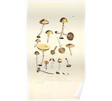 Coloured figures of English fungi or mushrooms James Sowerby 1809 1037 Poster