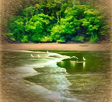 Herons on the Beach - Choco Colombia by Plinio Carvajal