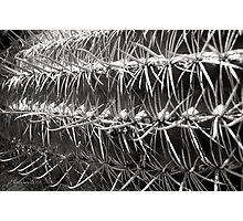 Barrel Maze Photographic Print