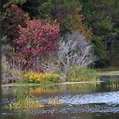 Fall at the Salt Marsh 987 by Michael McCasland