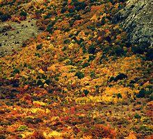 Autumn in the Mountains by Iuliia Dumnova