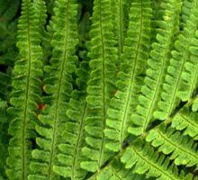 Fabulous Ferns Sticker