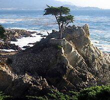 Lone Cypress by kechar