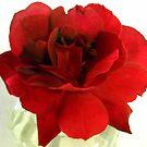 One Red Rose by debbiedoda