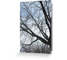 The stillness of a tree Greeting Card
