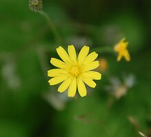 Tiny little yellow by Andy  Hall