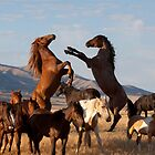 Wild Horses of the High Desert by Kent Keller