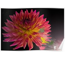 Beautiful, colorful dahlia, and faries Poster