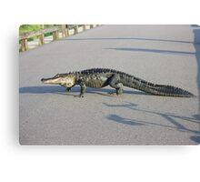 Alligator Crossing Canvas Print