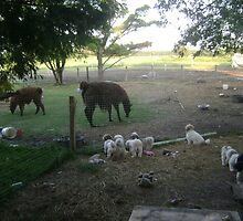 Puppies and Llamas Getting Entertained by stirlingacre
