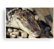 Alligator Smile Canvas Print
