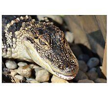 Alligator Smile Photographic Print