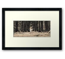 Forest corridor perspective  Framed Print