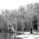 Cool Lake Trees by Debbie Robbins
