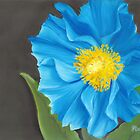"""Asian Blue,"" 10"" x 8"" Soft Pastel on Pastelbord. Himalayan Blue Poppy with Bright Orange & Yellow Center by Laura Bell"