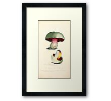 Coloured figures of English fungi or mushrooms James Sowerby 1809 0723 Framed Print