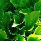 think green by geofflackner