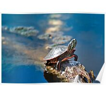 Youth Midland Painted Turtle II Poster