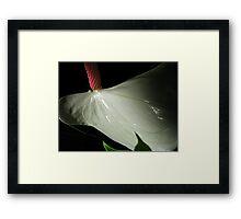 Dancing Anthurium Framed Print