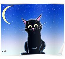 Midnight Kitten Poster