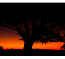 Panorama of a silhouette tree at dusk. Sticker