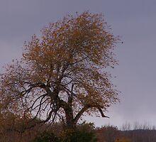 Liz's Tree by AlGrover