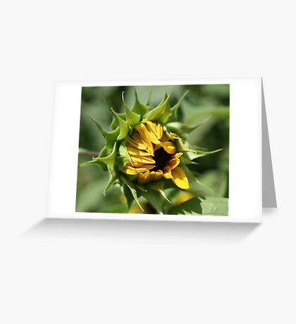 Shy Opening Greeting Card