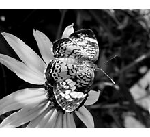 Black & White Pearl Photographic Print