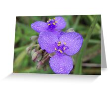 A DITCH BEAUTY-the blue beauty Greeting Card