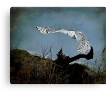 Wings of winter Canvas Print