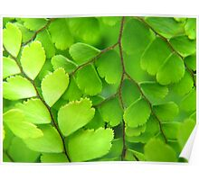 Maidenhair Poster