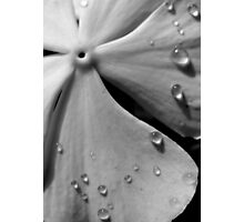 Flower Zen Photographic Print