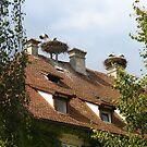 Living with Storks by Ellanita