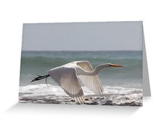 White in Flight One (cu) Greeting Card