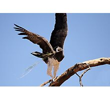 Marshall Eagle Photographic Print