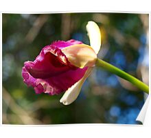 The first Orchid bud of Spring Poster