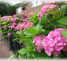 Vibrant Pink Hydrangeas - Vanishing Point Vignette by BlueMoonRose