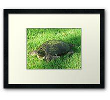 Snapper Framed Print