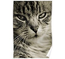 LE CHAT TABBY III Poster