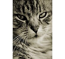 LE CHAT TABBY III Photographic Print