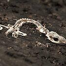 Found Objects #4, Gecko by farmboy