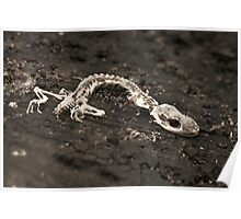 Found Objects #4, Gecko Poster
