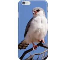 Pigmy Falcon iPhone Case/Skin