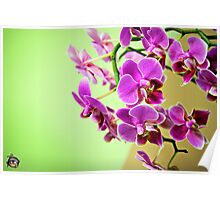 Pink Flowers Against Green Wall Poster