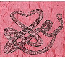 Love snakes Photographic Print