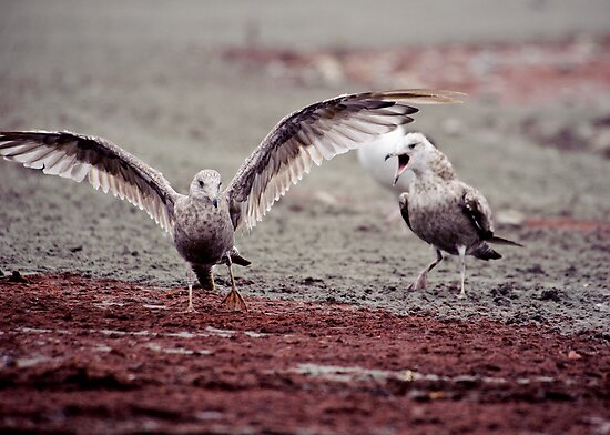Birds With Attitude - 1 by Jim Haley